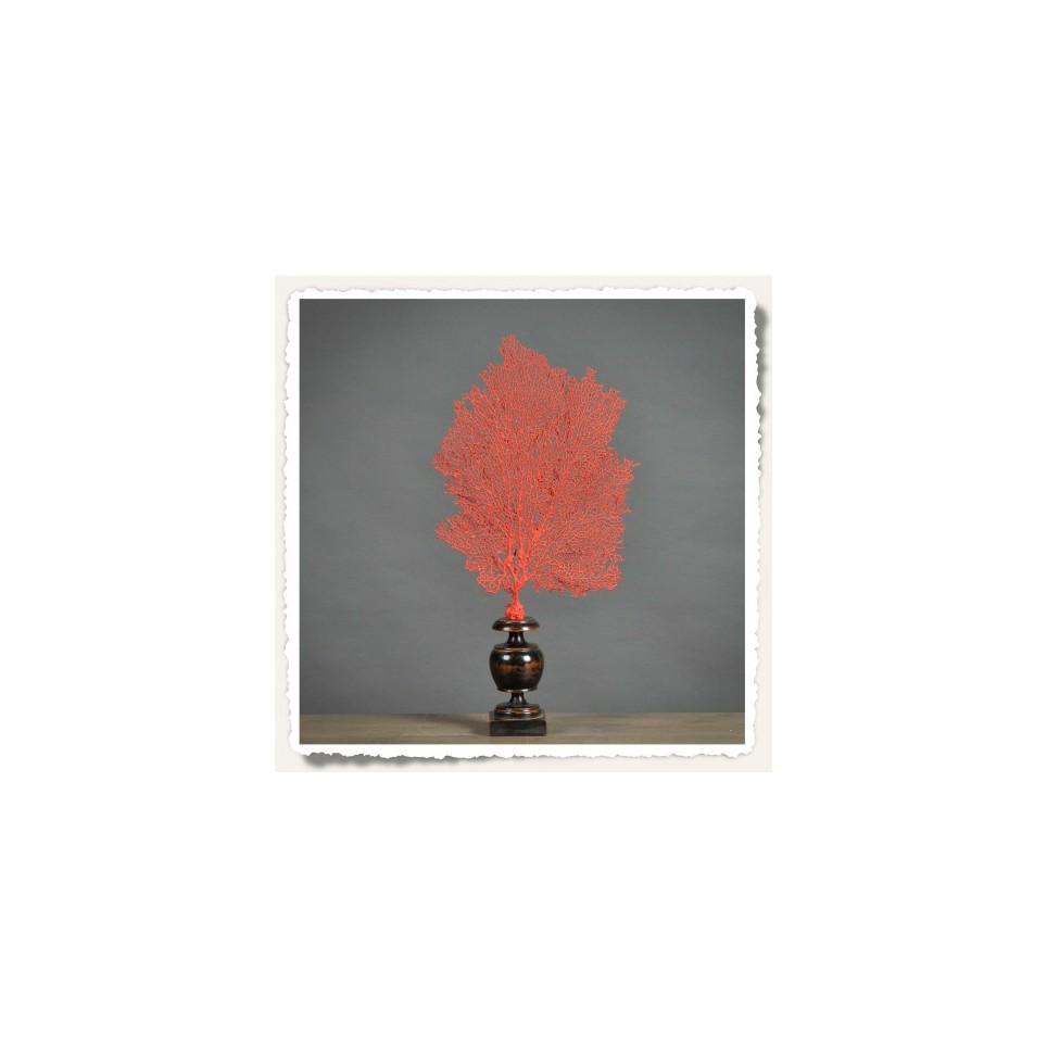 Gorgone rouge