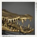 tête de crocodile dorée