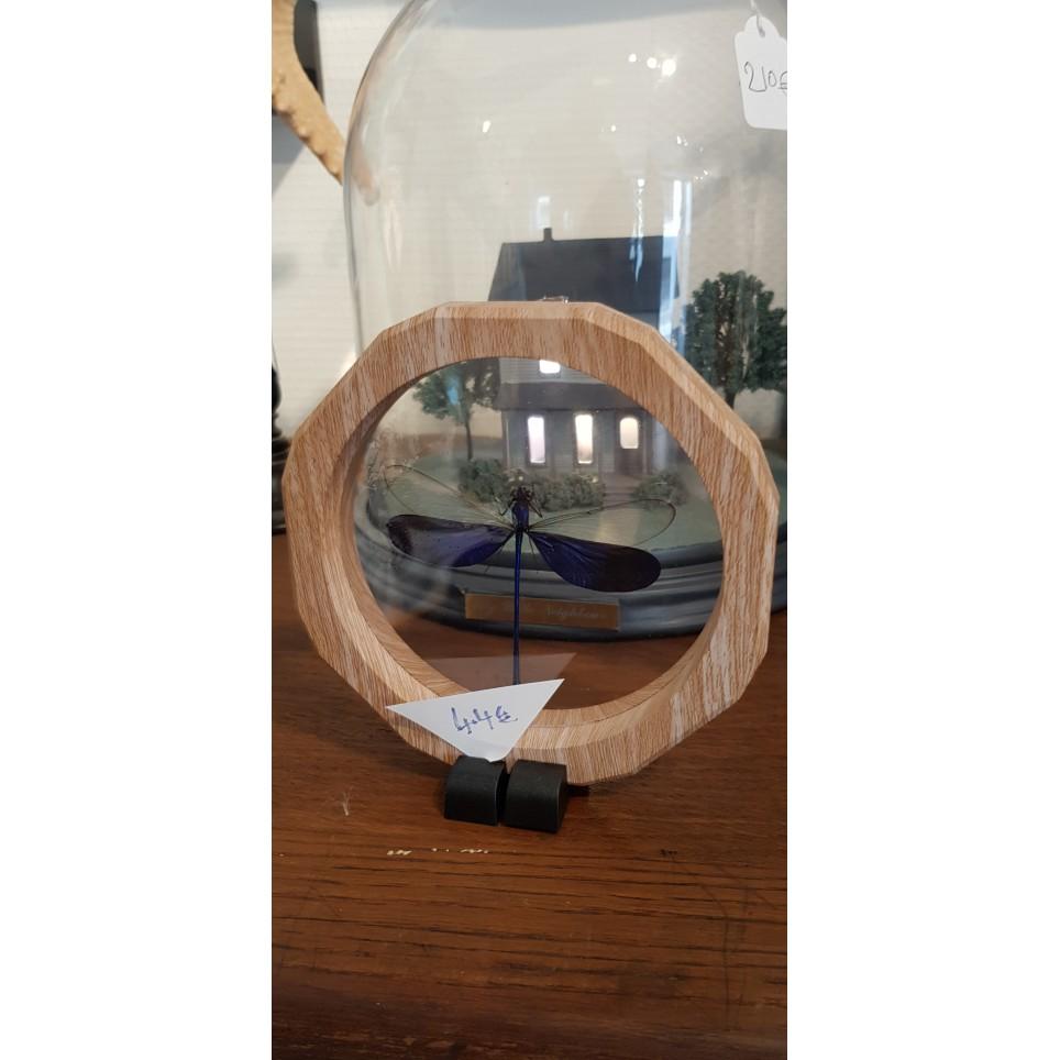 Libellule sous cadre silicone