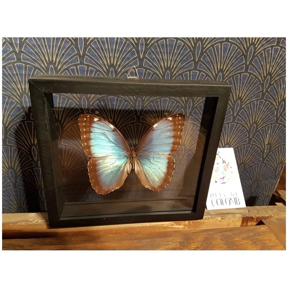 Papillon cadre double vitre